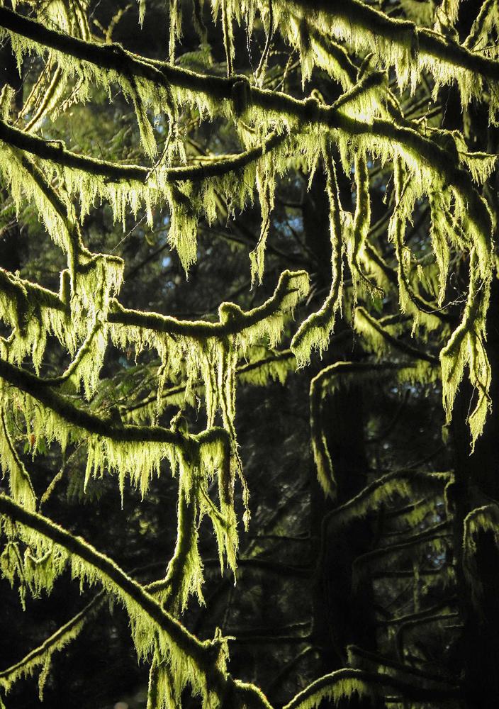 Green Cove Watershed, Olympia, Washington