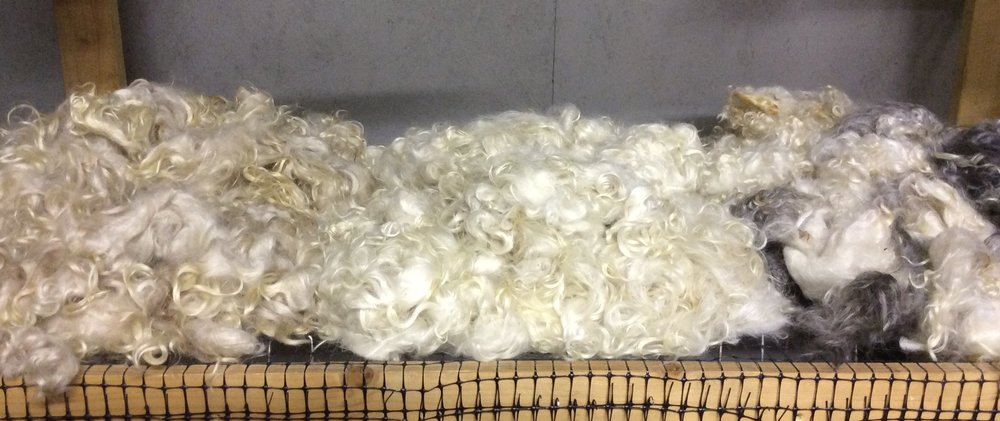 Washed mohair fleece