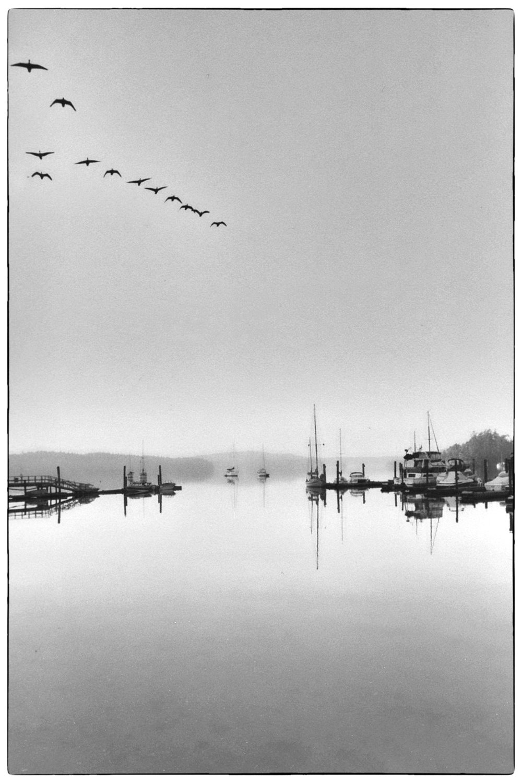 Roche Harbor, Washington, early 1980's.  Nikon F2, 55mm Micro-Nikkor, Kodak Plus-X