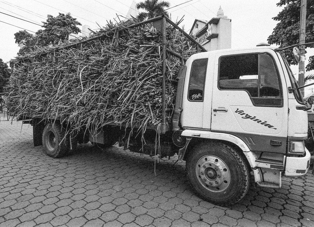 Sugar Cane, El Viejo. Nikon F2, Ilford HP5+