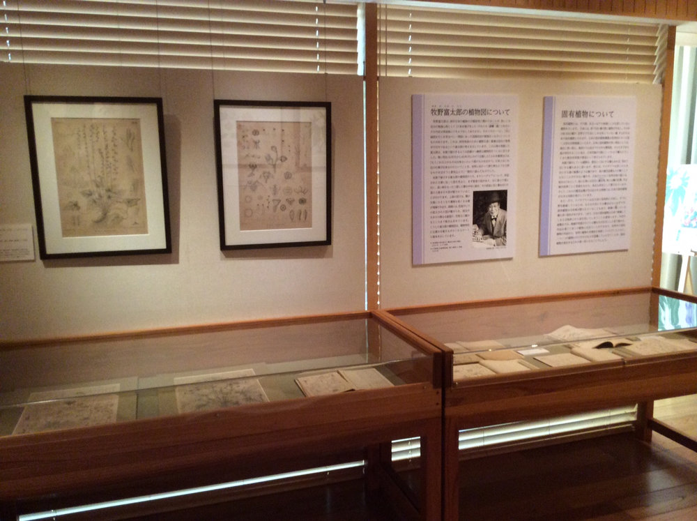 Display devoted to Dr. Tomitaro Makino, including information, original drawings, and publications featuring his work.
