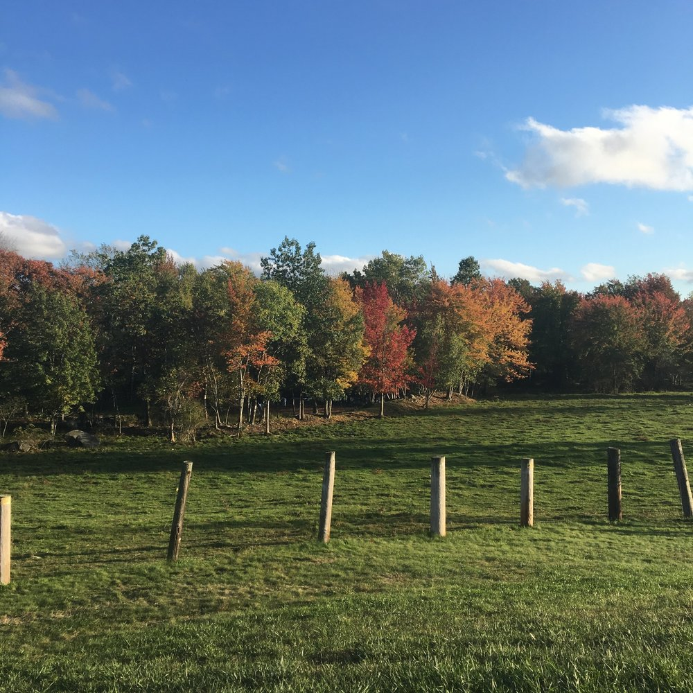 One of my new favorite leaf peeping spots. My mom and I enjoyed eating ice cream and admiring this view at Rota Spring Farm in Sterling, MA.