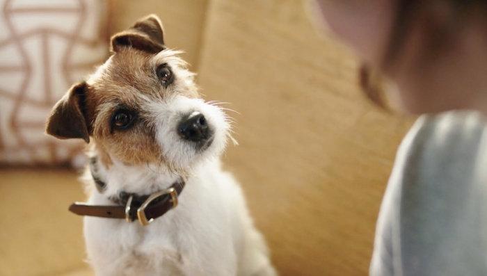 Activia</br><em>Dog</em>|liveaction