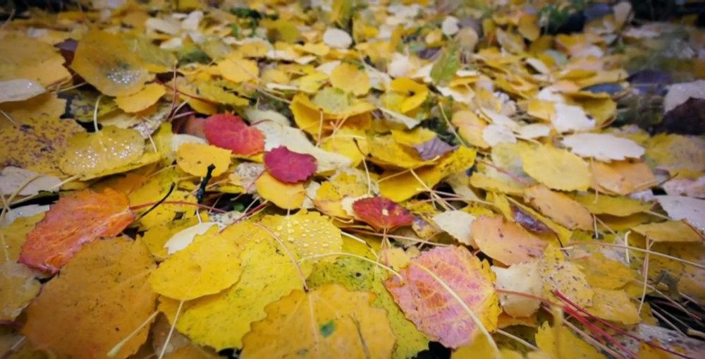 lägereld löv.jpg