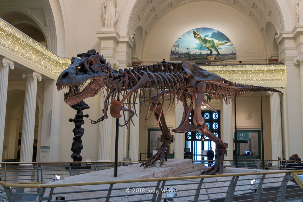 "In a scene that probably won't ever be repeated, FMNH PR-2081, better known as ""Sue"" basks in the holiday lighting in the Great Hall at the Field Museum of Natural History in Chicago, back in December of 2016. On Dec. 21 of this year, Sue got their own new accommodations, along with a major update to the presentation, reflecting the things that have been learned since the specimen first went on display nearly 20 years ago."