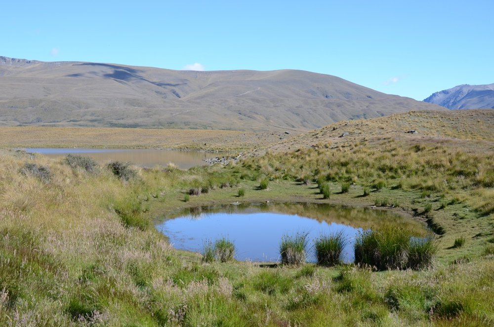 Montane tarn in the Mackenzie Basin (on which the edges have seasonal fluctuations that maintain open ground)