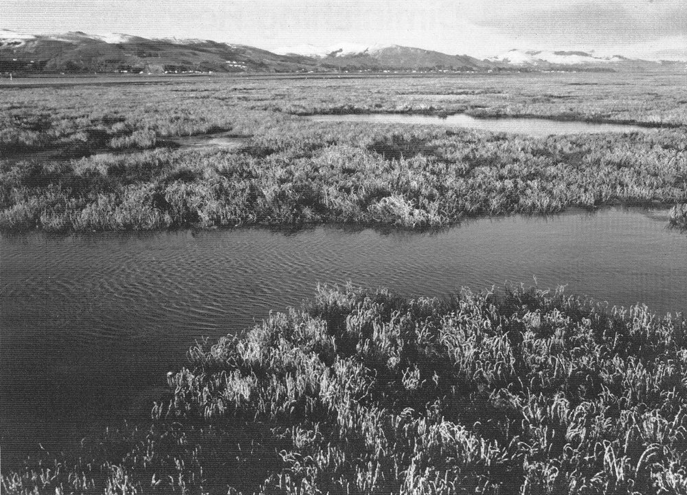 Aramoana Salt Marsh, Otago . The 225 hectare inter-tidal, salt marsh, and wetsack wetland is near the entrance to Otago harbour. The proposed aluminium smelter was to have been adjacent. Considered to be the best salt-marsh south of Nelson, it is an important habitat for wading birds, a rich feeding ground for fish at high tide, and supplies large quantities of detritus for bottom-feeding fish. Saline wetlands occur along several parts of the coast. Damage to them can influence stocks of commercial fish like snapper. The wetslack or marginal parts are particularly valuable botanically, but are also the most susceptible to damage from grazing and changes in water supply.