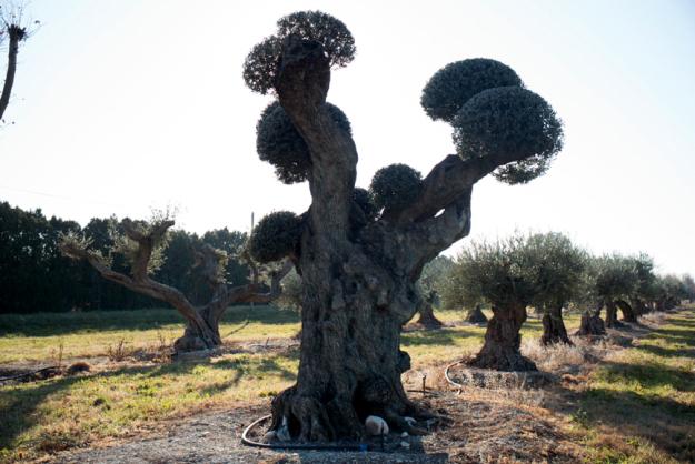 12-15-tree-l1003454.jpg