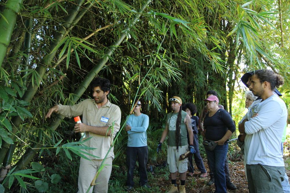 El instructor, Pablo Acevedo de Bambú Pueblo y Claudio Maxwell de Memeplex Design enseñando a un grupo de participantes del taller de Bambú.