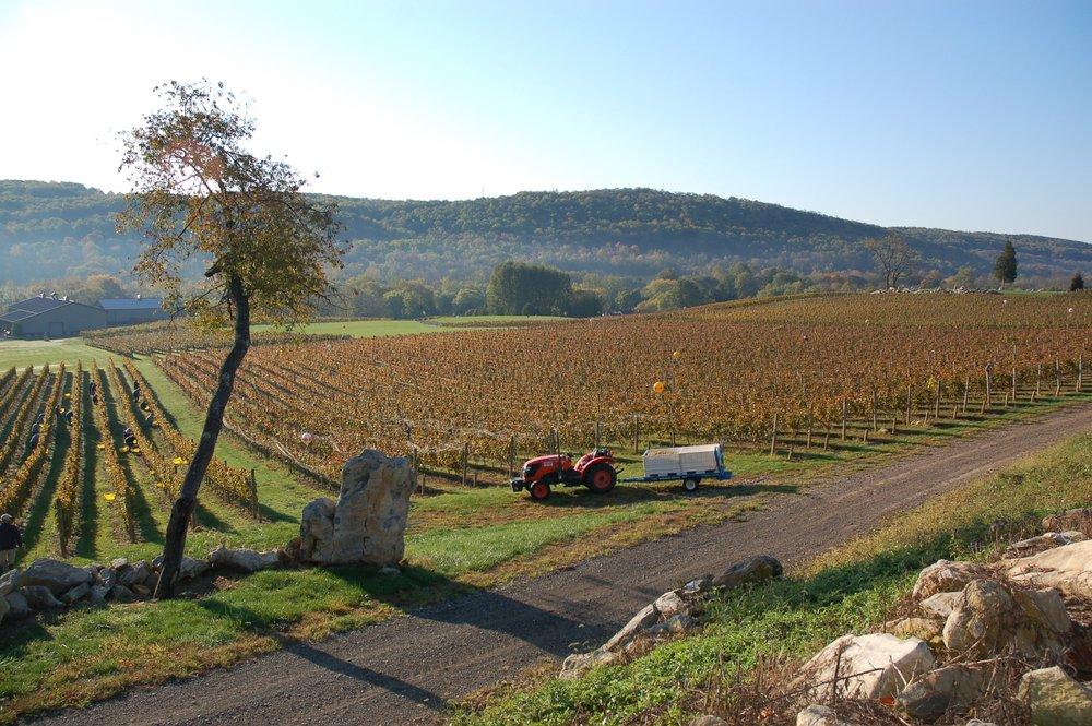 Alba Vineyard & Winery- Riesling, Pinot Noir, Cab Franc