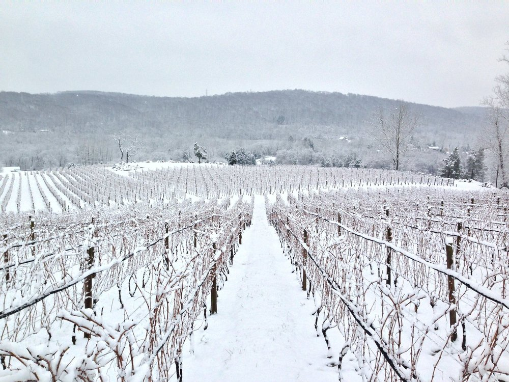 Alba Vineyard & Winery NJ vineyard in winter