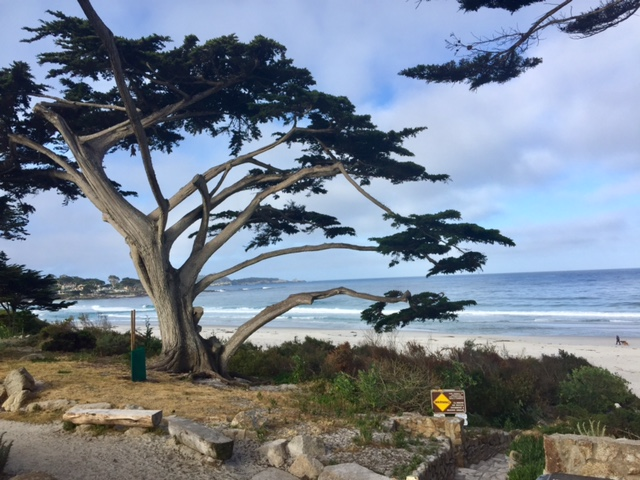 The famous Carmel Beach is a doggie paradise.  For more information, visit the official Carmel's Visitor Center -