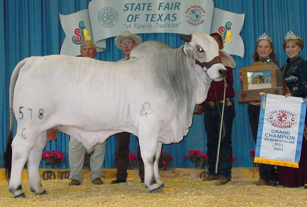 2001 ABBA National Grand Champion +JDH MR WOODMAN MANSO 578/6