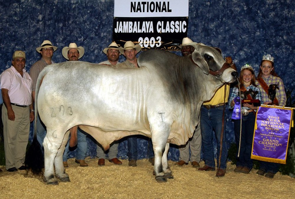 2003 ABBA National Grand Champion  JDH CASSY MANSO 293/6
