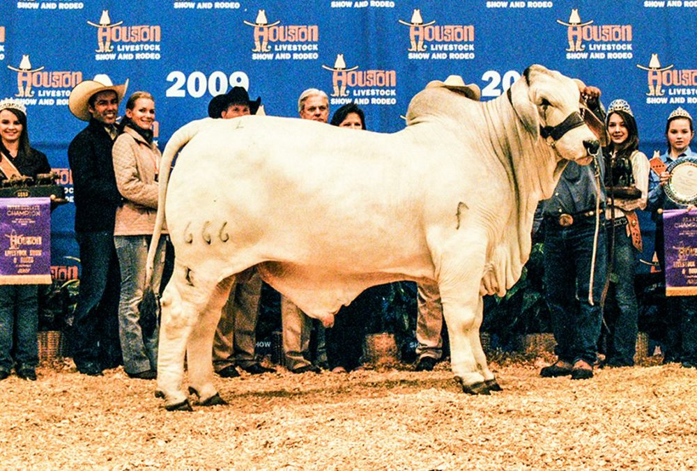 2009 Houston International Grand Champion JDH HAWK MANSO 666/5