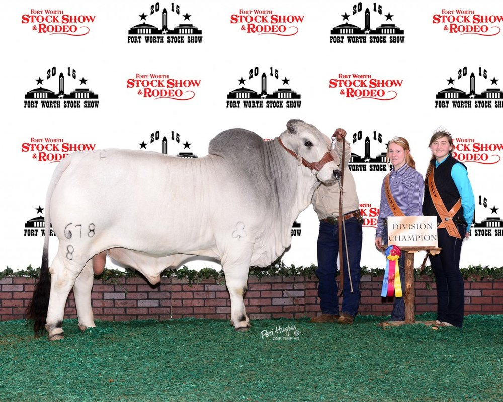 2015 Reserve Intermediate Champion JDH Sir Jacob Manso 678/8