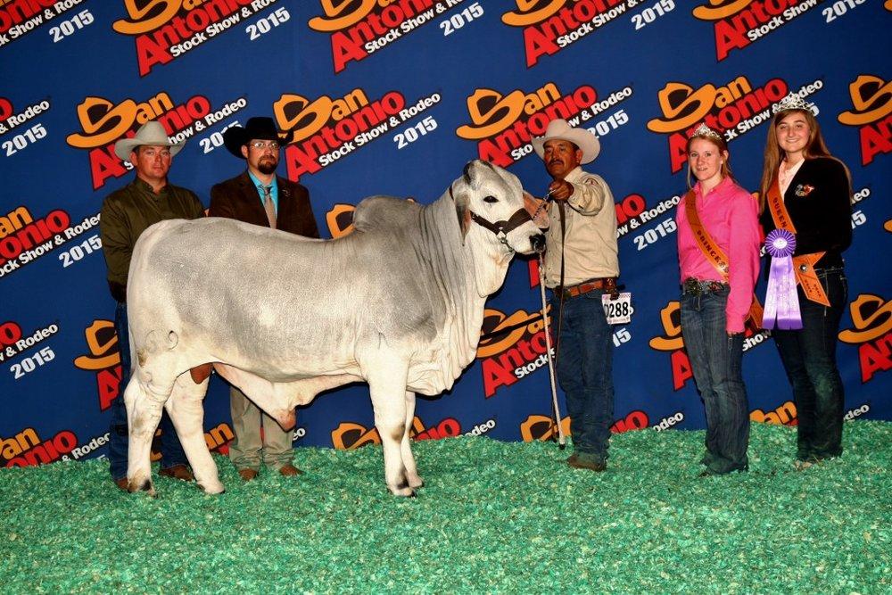 2015 Calf ChampionJDH Caesar De Manso 69/2