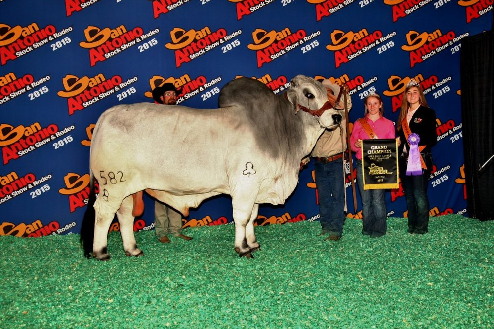 2015 Grand Champion Bull JDH Morgan De Manso 582/8