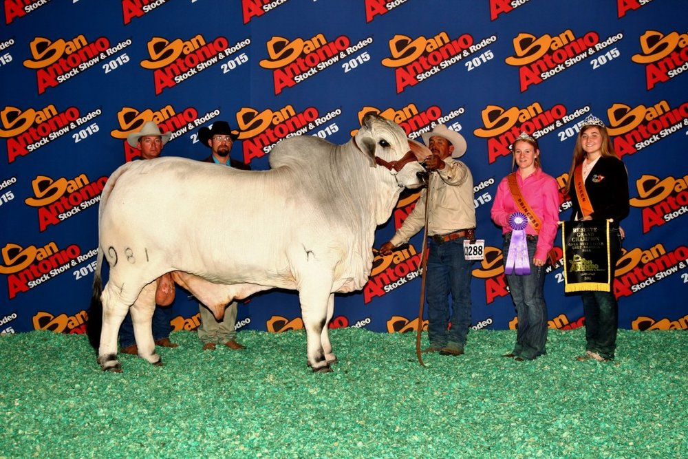 2015 Reserve Grand Champion JDH Mr Diablo Manso 981/1