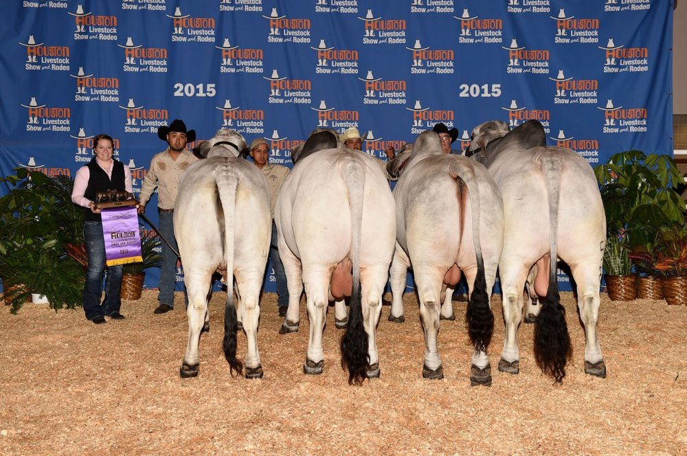 International Grand Champion Get-of-Sire  Sired by +JDH Woodson De Manso 206/7  Sired by +JDH Mr Woodman Manso 578/6