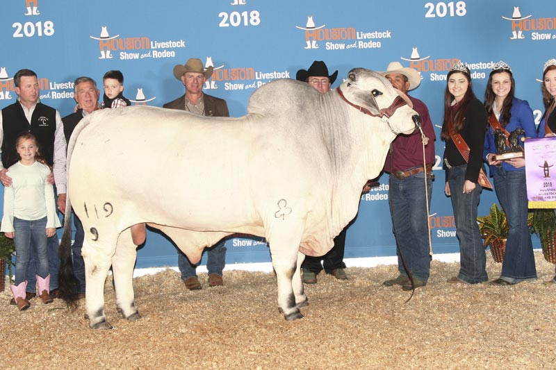 2018 ABBA International Show Junior Champion Gray Bull JDH MR CALGARY MANSO 119/9