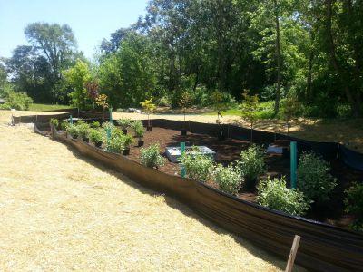 Denham Street Rain Garden -