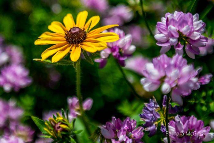 Wildflower-Walk-700x467.jpg