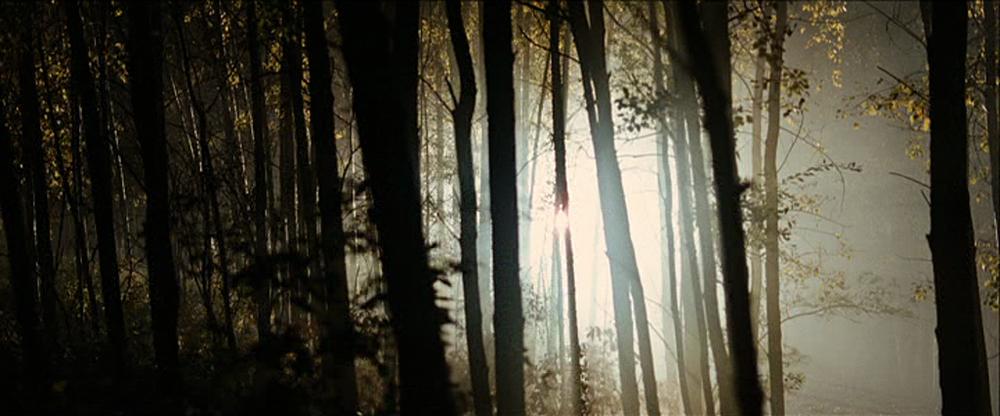 11-light-through-trees1.png