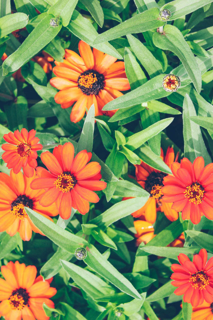 Pretty Orange Flowers Shamia Casiano Creative