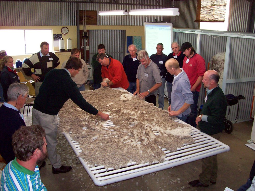 SUPERFINE WOOL HANDLING TRAINING PROGRAM 27-29 FEB ARARAT 002.jpg