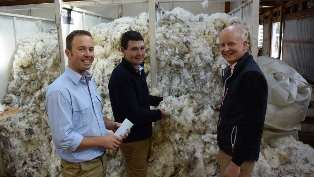 Saxon style: AWN wool specialist Russell Macgugan with Will Kinghorn and Sierra Park Merino Stud co-principal Will Crawford, Victoria Valley.