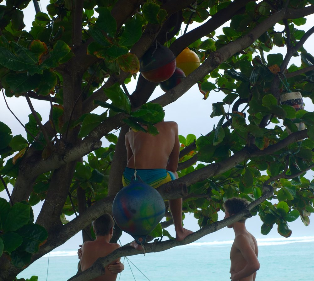 """My Favorite Tree  Facebook Campaign: """"Surf checking tree"""""""