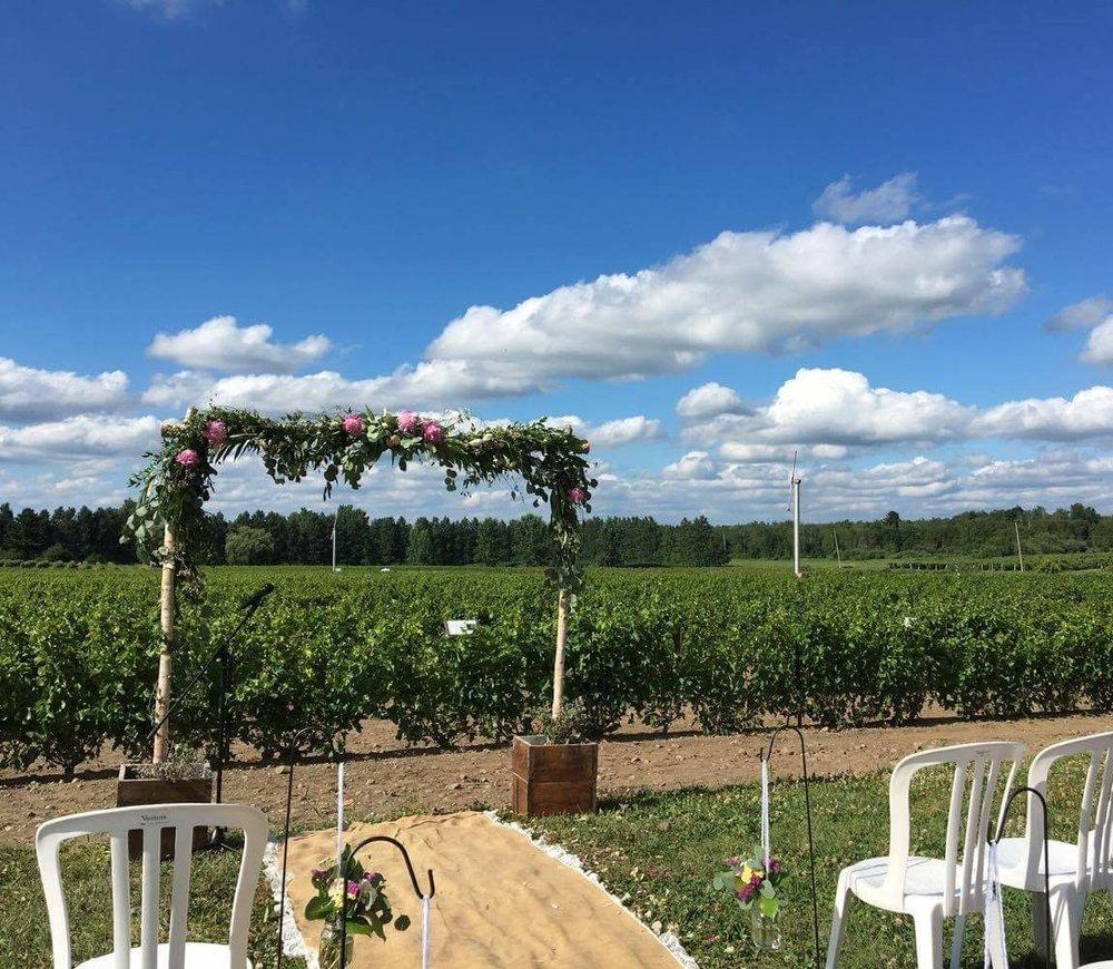 Vineyards, wedding. Eastern Township. Vignoble de l'Orpailleur