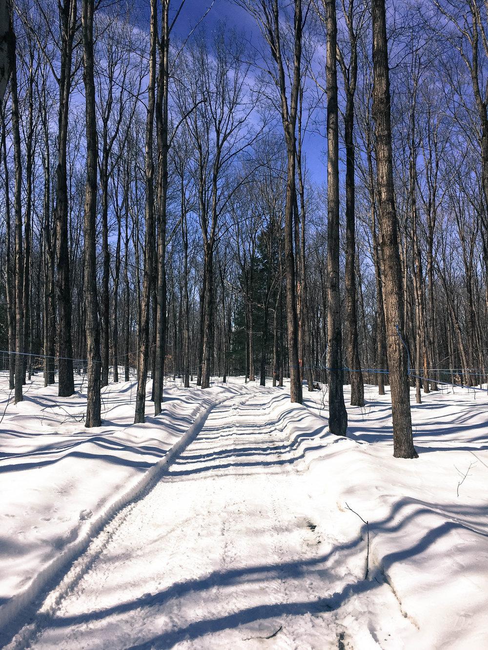 Maple wood near a Cabane à sucre