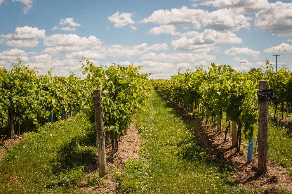 Chateau de cartes, a vineyard near Montreal