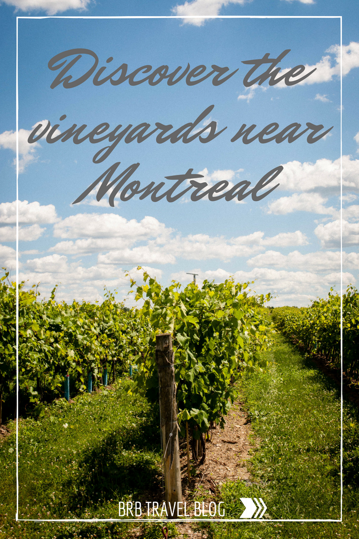 Discover the vineyards near Montreal