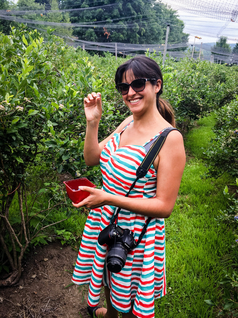 BRB Travel Blog picking blueberries at POTAGER MONT-ROUGE HALTE GOURMAND