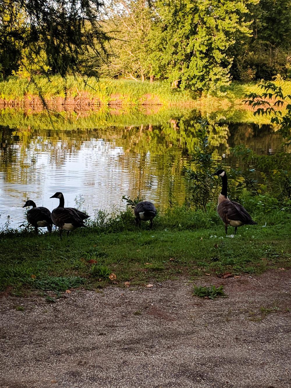 Scottstown park