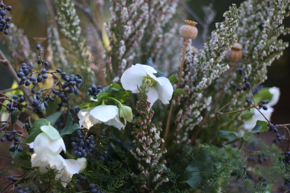 - Snowy hellebores glow against almost-black privet berries. (In my NorCal garden, Hellebore grows merrily in dry shade, is gopher/deer resistant, and comes back stronger each year.)I added poppy pods that a friend gave me and heather, diflexus, and bare branches for texture.