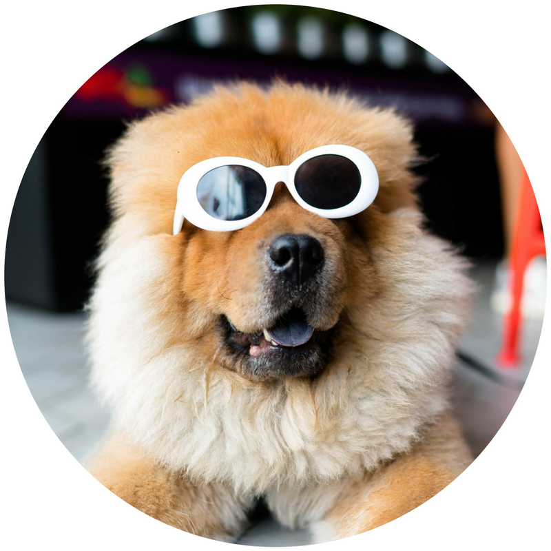 puppy sunglasses.png