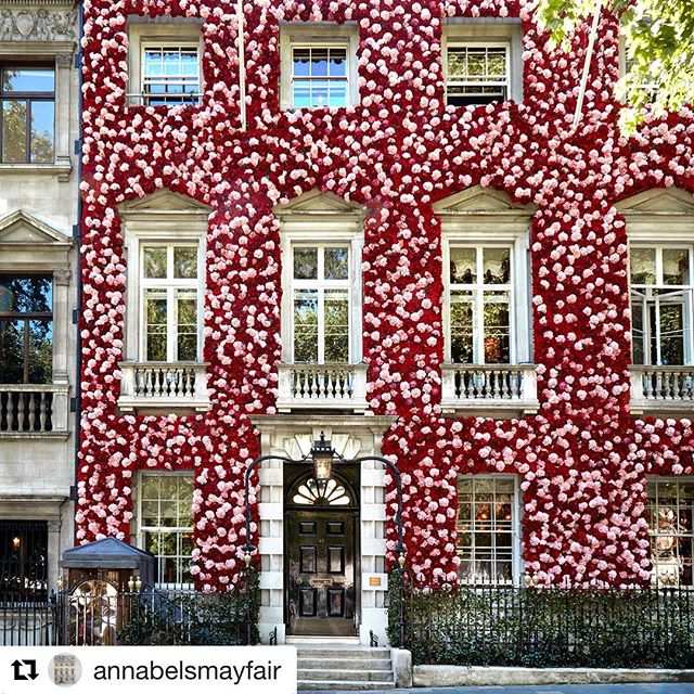 Private club Annabel's Mayfair is all dressed up for the Chelsea Flower Show.