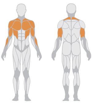 muscoli (3).jpg