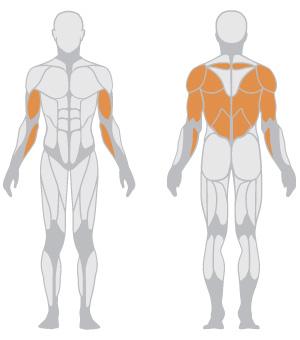 muscoli (6).jpg