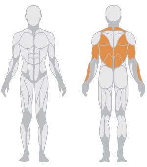 muscoli (7).jpg