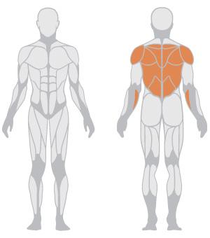 muscoli (8).jpg