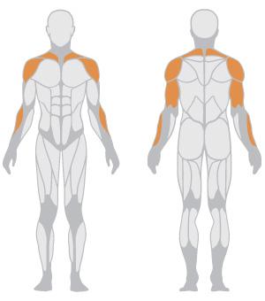 muscoli (12).jpg