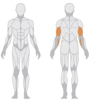 muscoli (15).jpg