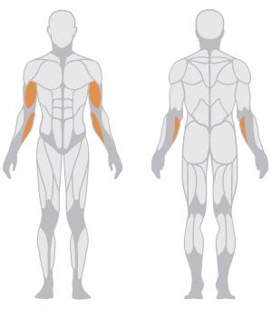 muscoli (16).jpg