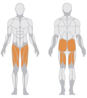 muscoli (19).jpg