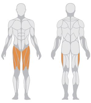 muscoli (20).jpg